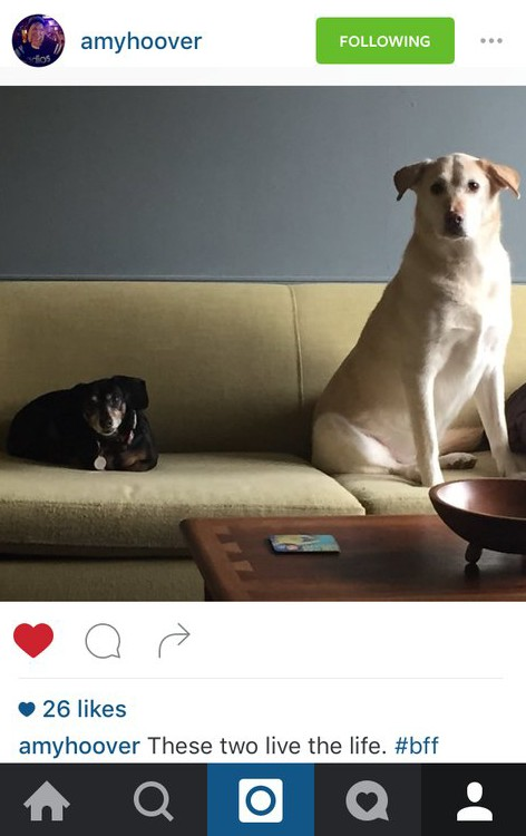 Instagram of two dogs
