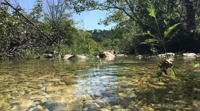 Barton Creek Greenbelt in Austin